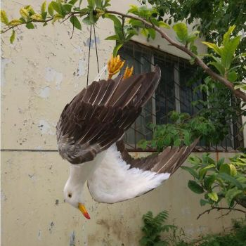 Real Feathered Dead Seagull | Bird Repellers στο  SECURETECH